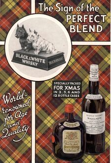 1930s UK black and white whiskey whisky dogs