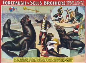 Forepaugh & Sella Brothers 1900s seals performing entertainers bros