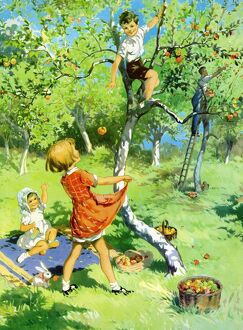 Infant School Illustrations 1950s UK picking apples fruit climbing trees orchards