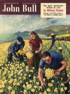 john bull/john bull 1950 1950s uk picking harvesting flowers